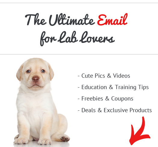 owners knowledge of dogs essay Find paragraph, long and short essay on dog for your kids, children and  students  teachers in schools and colleges in order to enhance student's skill  and knowledge about any subject  it is very faithful animal and never cheats its  owner.