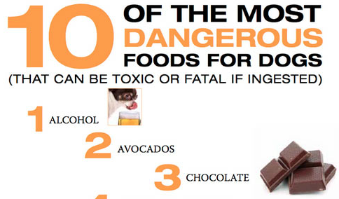 10 Of The Most Toxic Foods For Dogs Please Share