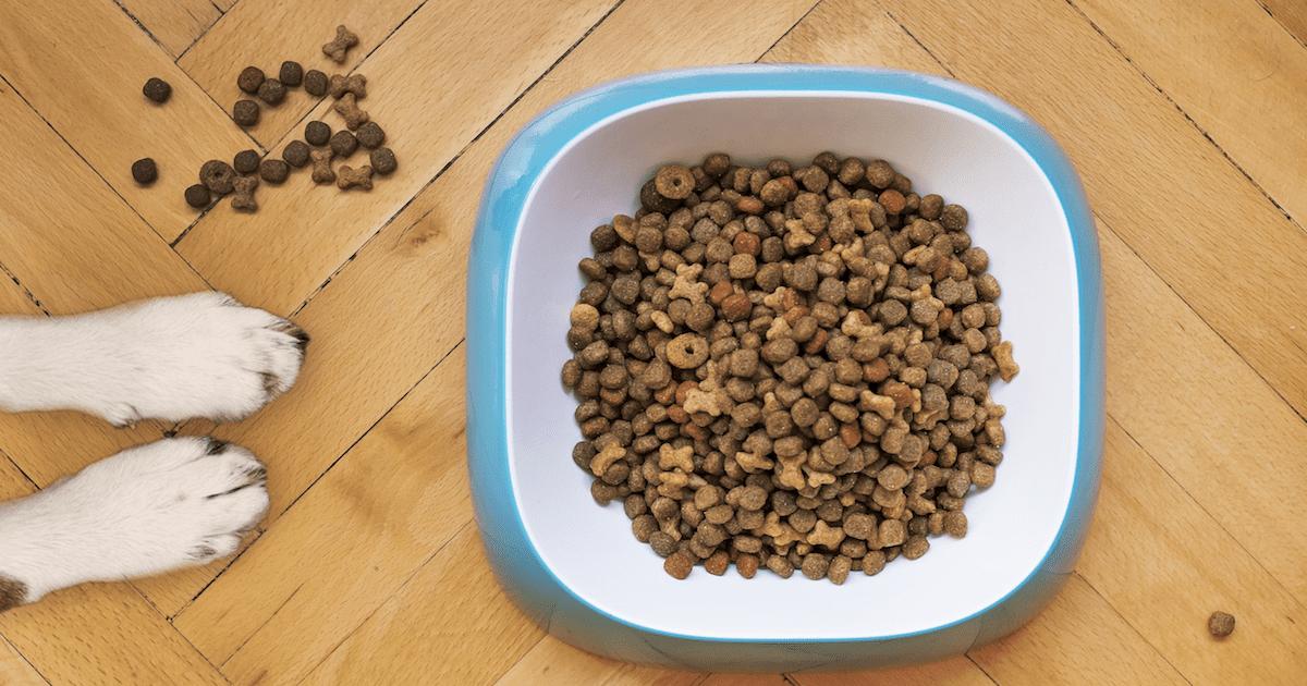 Dog food ingredients to avoid