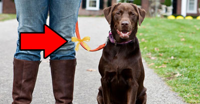 Do You Know What A Yellow Ribbon Tied On A Dog's Collar Means?