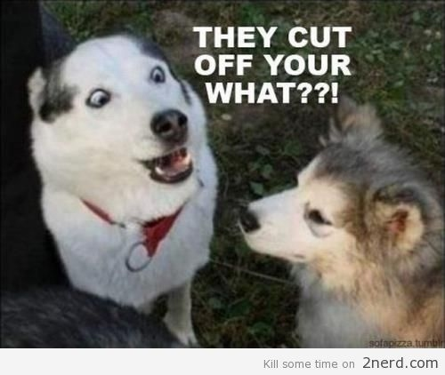This pooch is scared and shocked to find out what the vet cuts off if you are spayed!  LOL!