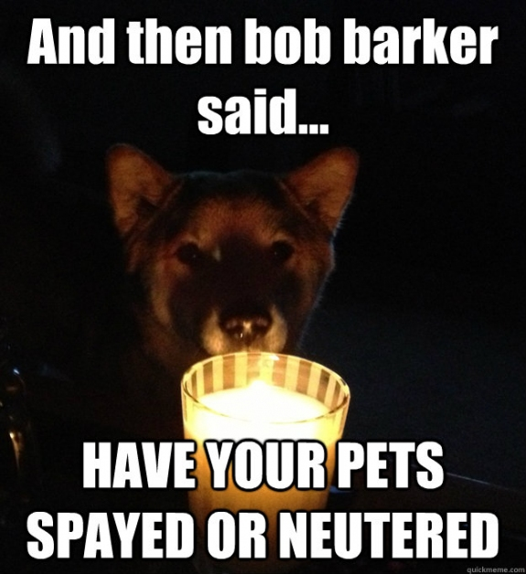 Being neutered or neutered is like a dog horror story!  LOL!  Leave a comment and tell us what you think!