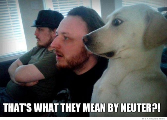 These three men are shocked to find out what neuter means!  LOL!