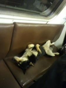 http://en.wikipedia.org/wiki/File:Dog_asleep_on_the_Moscow_Metro.jpg