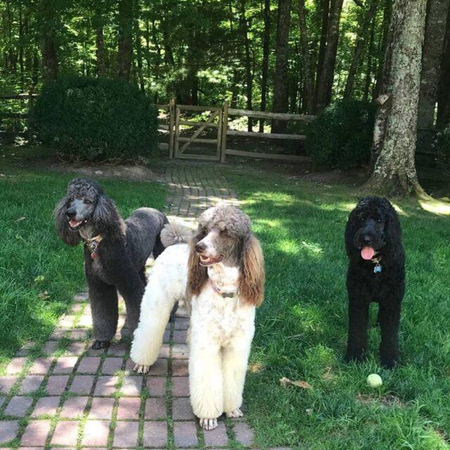 heathiest dog breeds