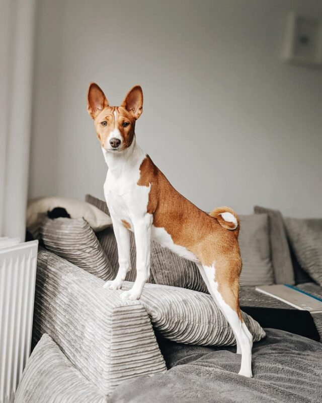 dogs least health problems