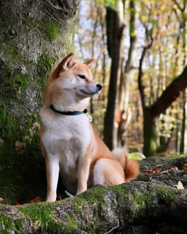 dogs fewest health problems