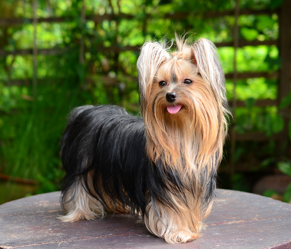 10 Of The Hardest Breeds To Groom