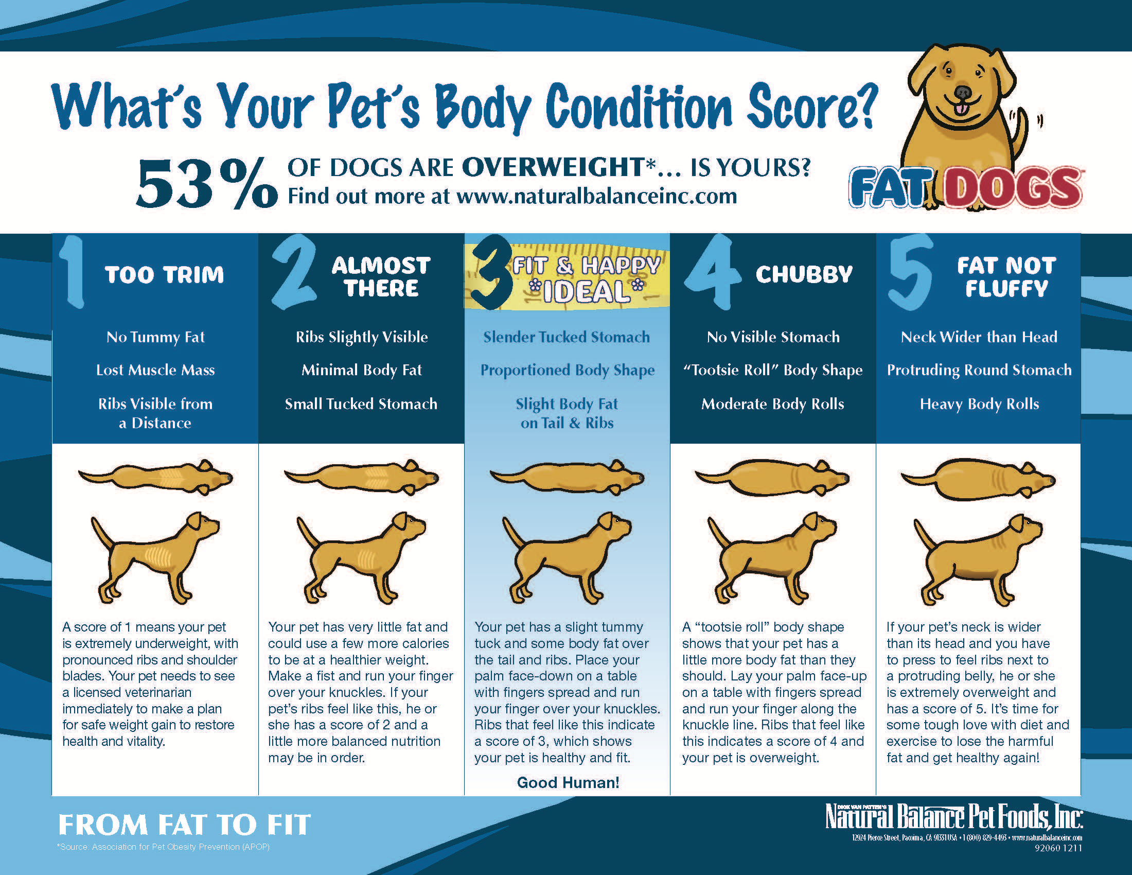 Important how to tell if your dog is overweight iheartdogs compare your dogs body shape to a chart like this one geenschuldenfo Image collections