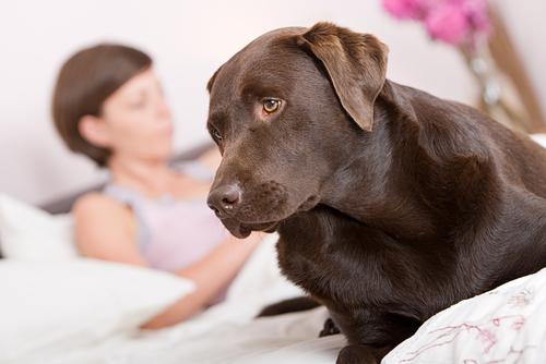 Dog Senses Eartquakes Video