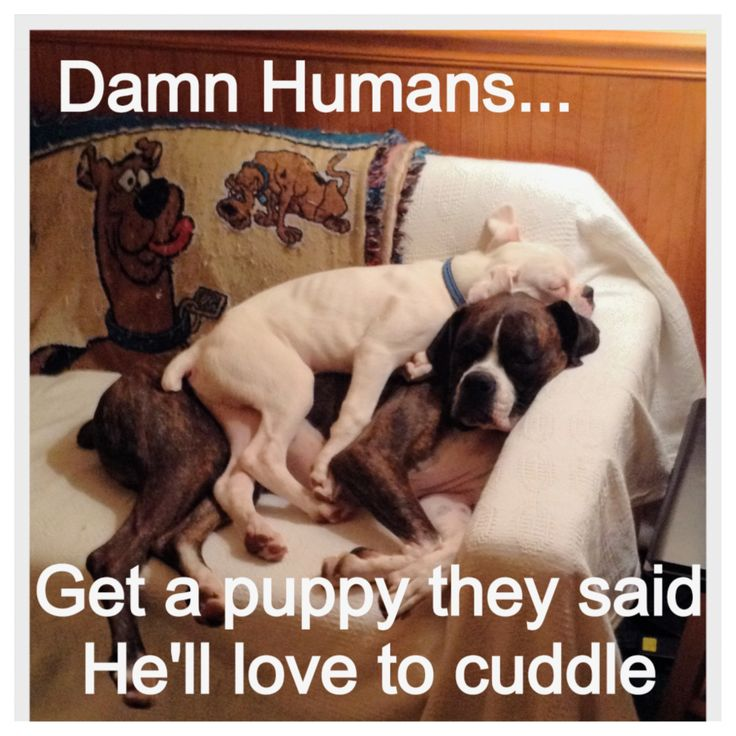 I think this puppy just loves a warm bed!