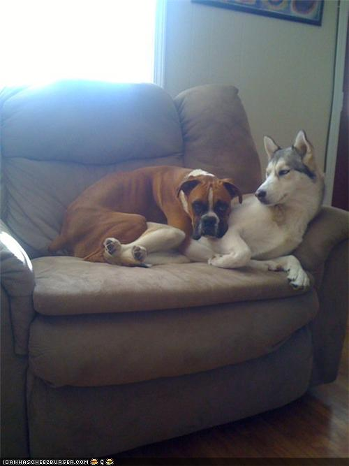 8 dogs who don t understand the concept of personal space - Dogs for small spaces concept ...