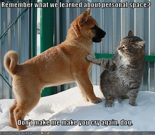 And this puppy is getting lessons about personal space from the cat!