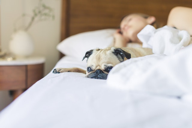 how to prepare a dog for baby