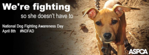 The ASPCA encourages the public to change their Facebook cover photo to this image to support National Dog Fighting Awareness Day