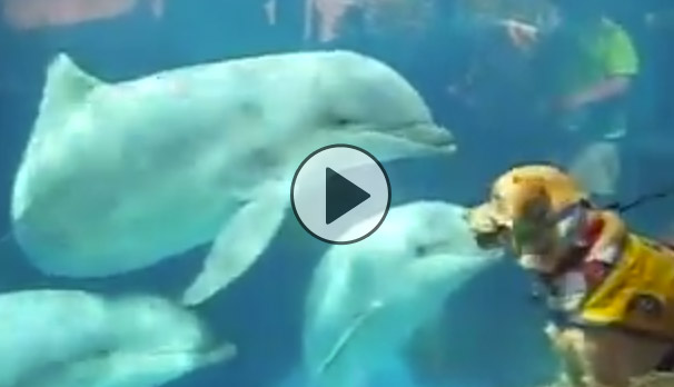 a dog just met dolphins for the first time youve gotta
