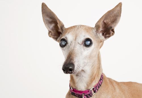 Can Dogs Sleep With Flea Collars