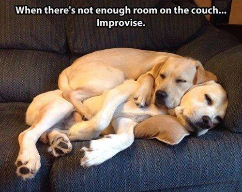 When there's no room in the couch, you gotta improvise.