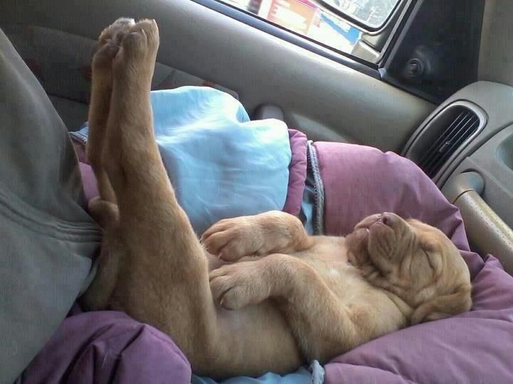 Seems like a lot of puppies love to put their feet up!