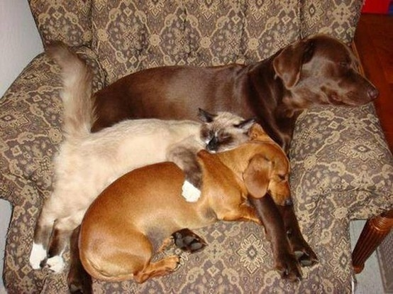Share the couch. There's always room for one more!