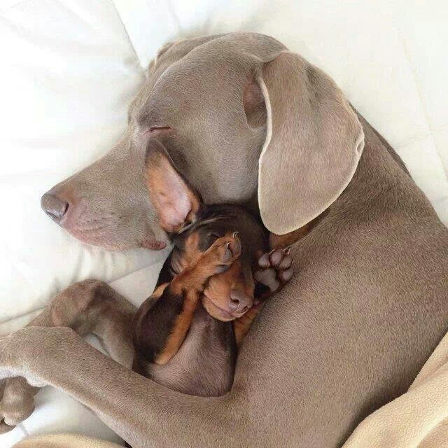 Doesn't matter if you're big or small! We all love cuddles!