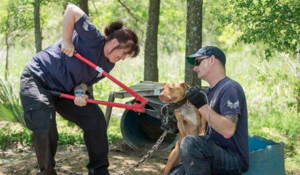 That Second When a Canine Is Rescued from Their Abuser [12 POWERFUL PICS]