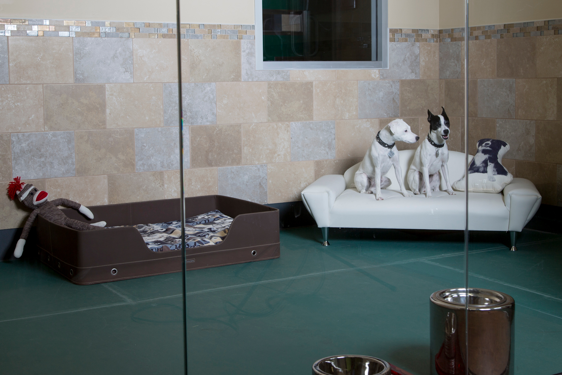 Top 5 luxurious pet hotels for 5 paws hotel and salon
