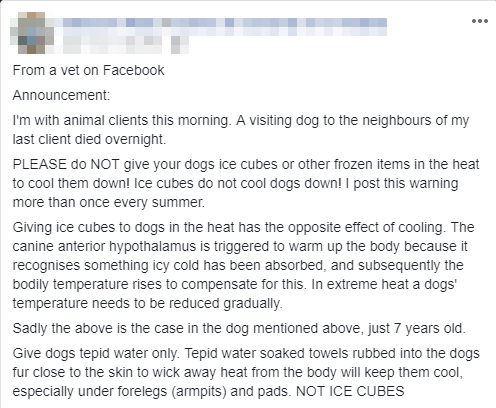 FACT or FICTION: Can Ice Harm Your Dog? The Truth Behind The Viral Story