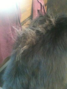 Taken by a groomer: Dog was totally matted and hair discolored down its back (I'd cut some out before deciding to take pic) owner swears its from Frontline. But is it user error?