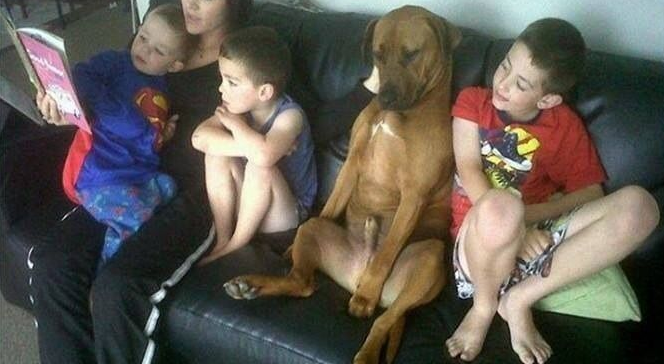 12 Dogs Who Don't Know They're Dogs