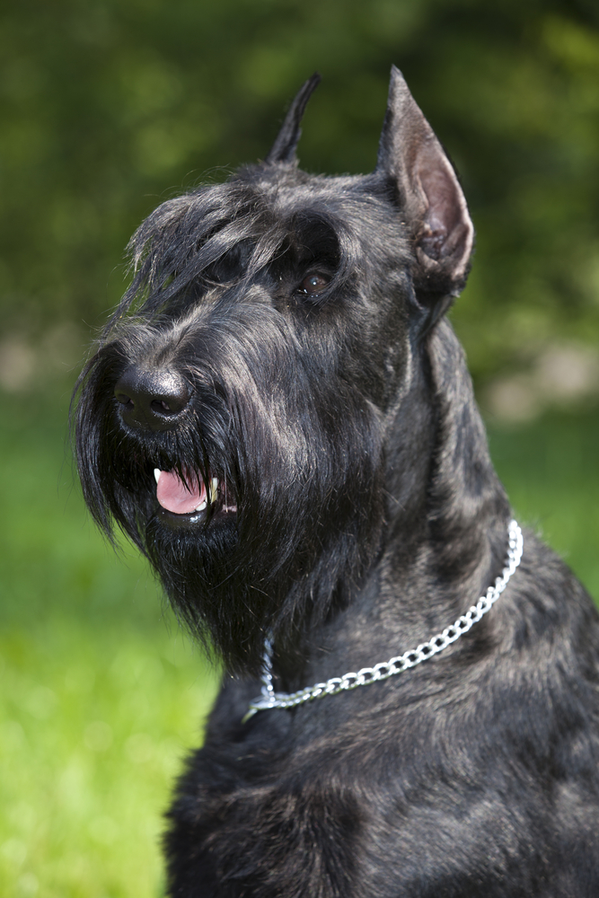 The 10 Best Guard Dog Breeds