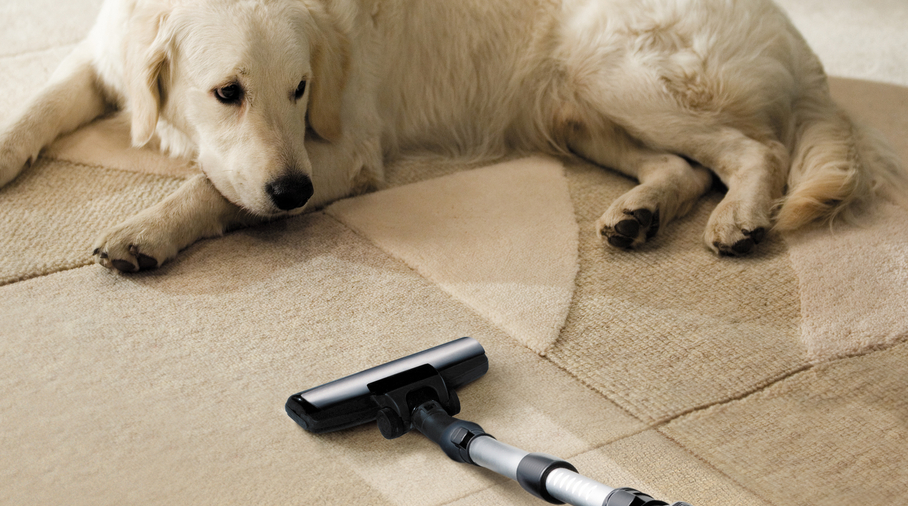 Tips For Cleaning Dog Stains From Your Carpet