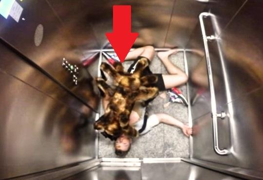 Someone Decided to Put a Spider Costume On Their Dog u0026 Prank People. Watch This! & Someone Decided to Put a Spider Costume On Their Dog u0026 Prank People ...
