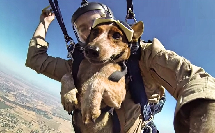 Dog goes skydiving with his owner, and absolutely loves it ...