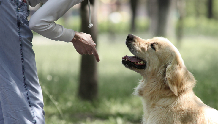 10 Handy Hand Signals For Deaf Dogs