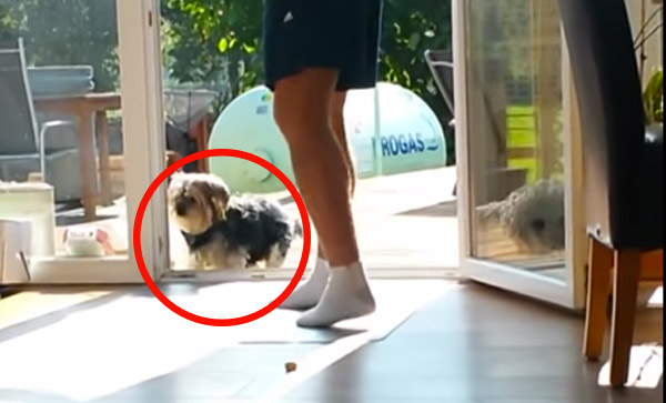 Dog Refuses To Come Inside Until Owner Opens Quot Invisible Quot Door