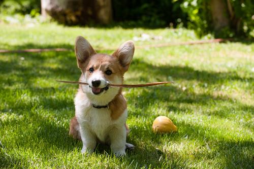 The 10 Friendliest Dog Breeds – iHeartDogs.com