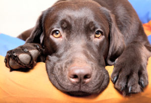 Probiotics For Canine – What Each Proprietor Wants To Know