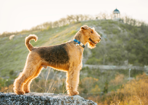 Airedale Outdoors
