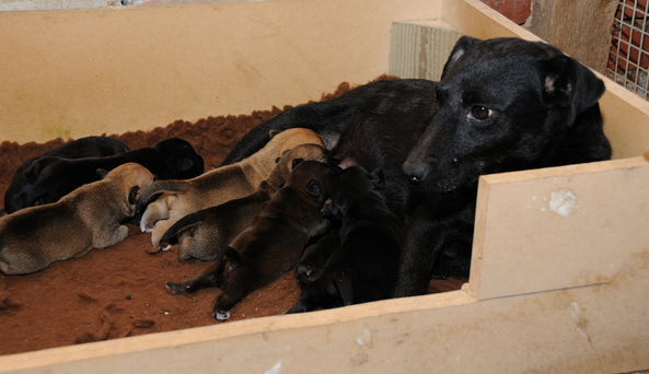 10 Signs That A Puppy Is From a Puppy Mill