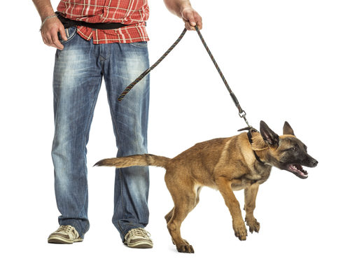 How To Prevent Your Dog from Tugging On The Leash