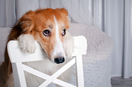 Snowed In? Indoor Activities for Dogs That Hate the Cold