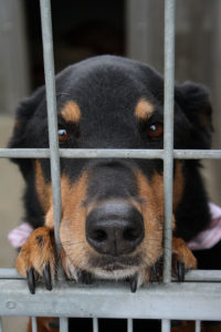 It is hard to resist a face like this, but giving him a home just to dump him again is even worse. Image source: @SpotUs via Flickr