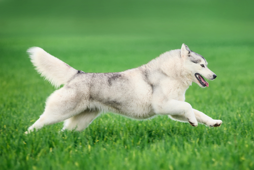 10 most hyper dog breeds – iheartdogs