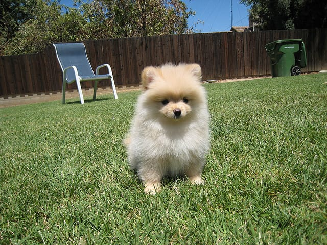 dogs cute puppies