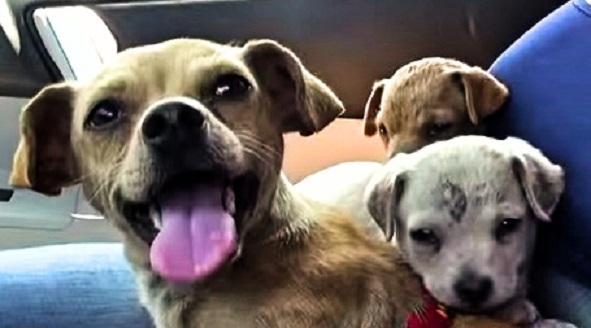 Plush Pups Dog Grooming Pet Supplies