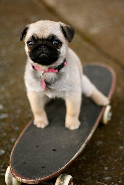 adorable little puppy