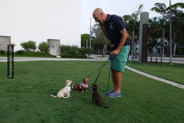 Hartstein training multiple dogs at one time in Miami.  Image source: Russell Hartstein