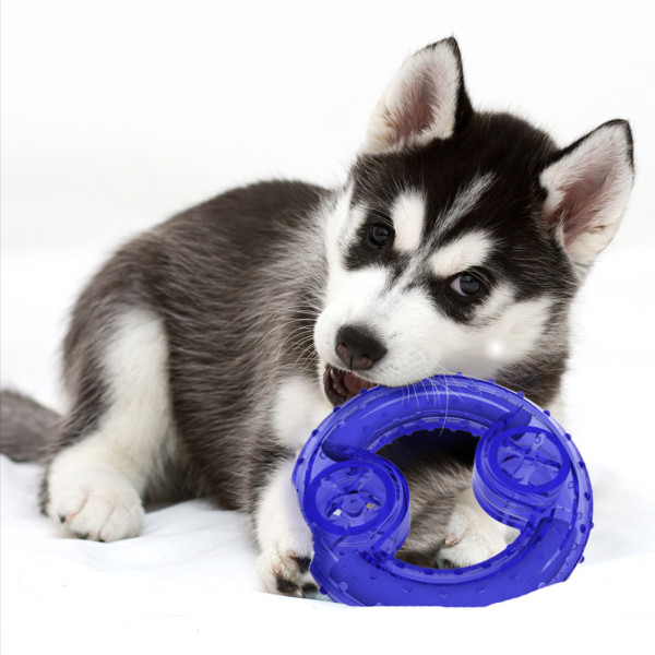 Freezable teething rings are good for any age dog and may entice chewing. Image source: Petsmart.com