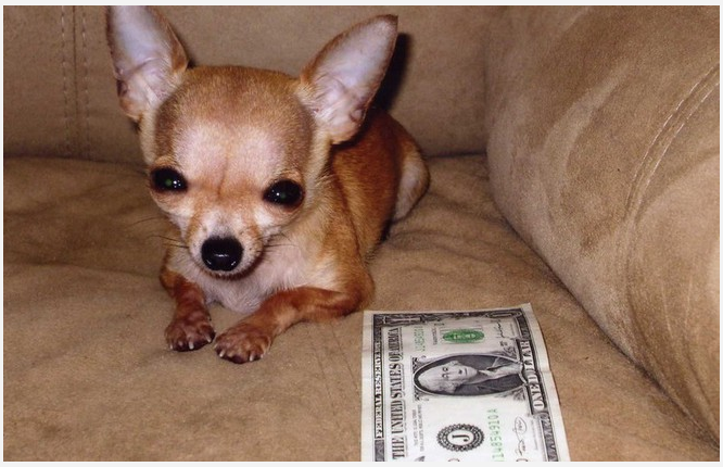 the smallest dog in the world - 800×542